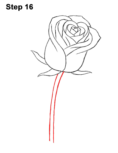 How to Draw Red Rose 16