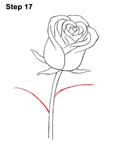 How to Draw Red Rose 17