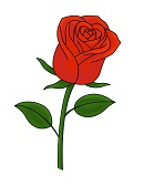 How to Draw Red Rose Flower