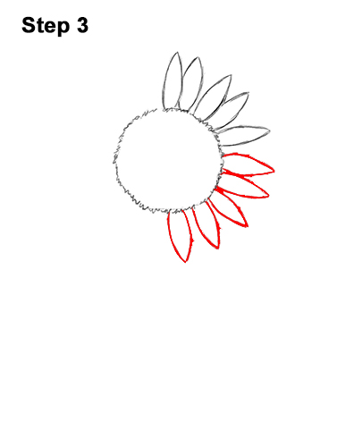 How to a Draw Cartoon Yellow Flower Sunflower 3
