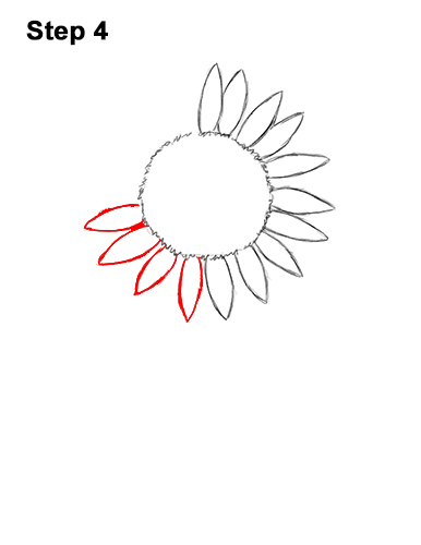 How to a Draw Cartoon Yellow Flower Sunflower 4