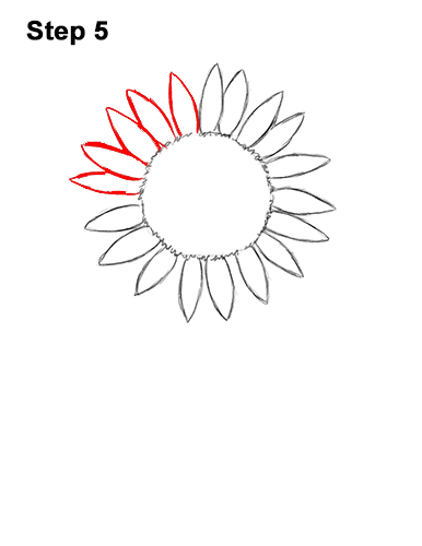 How to a Draw Cartoon Yellow Flower Sunflower 5