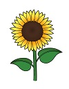 How to Draw Cartoon Flower Sunflower